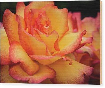 Rose Beauty Wood Print by Jean Noren