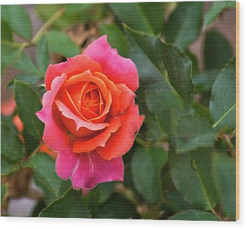 Rose Wood Print by Bill Barber