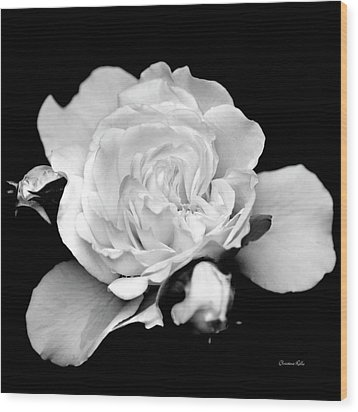 Wood Print featuring the photograph Rose Black And White by Christina Rollo