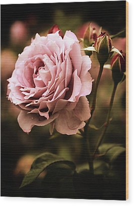 Rose Blooms At Dusk Wood Print by Jessica Jenney
