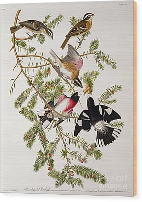 Rose Breasted Grosbeak Wood Print by John James Audubon