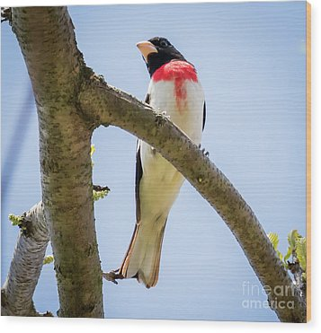 Wood Print featuring the photograph Rose-breasted Grosbeak Looking At You by Ricky L Jones