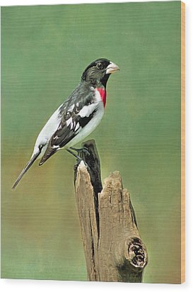 Rose Breasted Grosbeak Wood Print by Marion Johnson