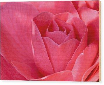 Rose Camellia Wood Print by Lori Kesten