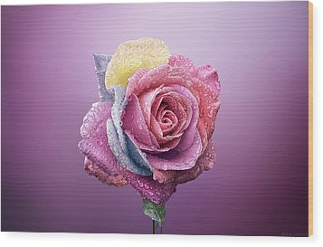 Rose Colorfull Wood Print