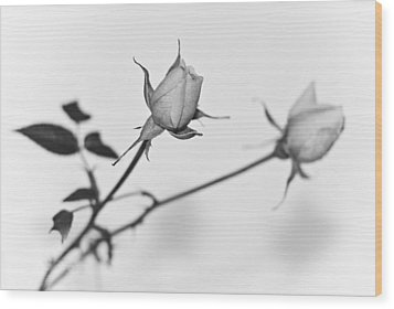 Rose Duo Wood Print by Ryan Kelly