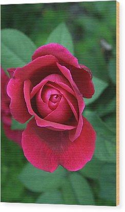 Rose Eye Wood Print by Alan Rutherford