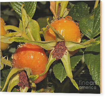 Wood Print featuring the photograph Rose Hips by Debbie Stahre