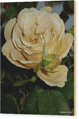 Rose In Ecru Wood Print by Lois Lepisto
