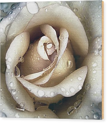 Wood Print featuring the photograph Rose In Gold With Water Drops by Julie Palencia