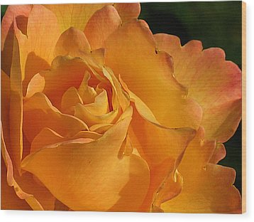 Rose In Ruffles Wood Print by Mg Blackstock