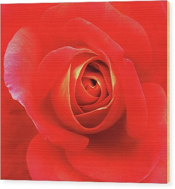 Rose Wood Print by Mary Ellen Frazee