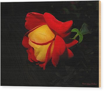 Wood Print featuring the photograph Rose Of Fire by Joyce Dickens