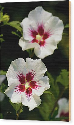 Wood Print featuring the photograph Rose Of Sharon by Christina Rollo
