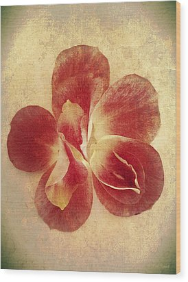 Wood Print featuring the photograph Rose Petals by Linda Sannuti