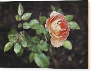 Wood Print featuring the photograph Rose by Stefan Nielsen
