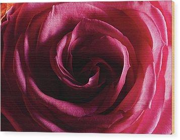 Rose Study 1 Wood Print