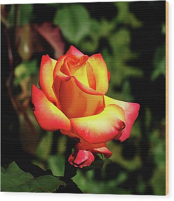 Wood Print featuring the photograph Rose To Remember by Dale Stillman