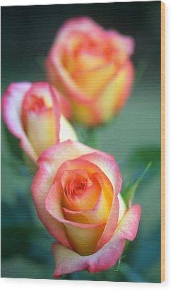 Rose Trio Wood Print by Kathy Yates