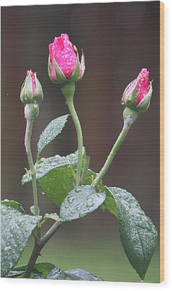 Wood Print featuring the photograph Rose Trio by Vadim Levin