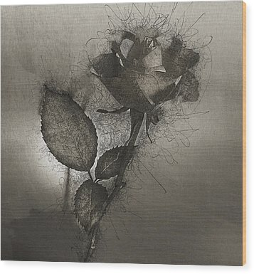 Wood Print featuring the photograph Rose Variation#04 by Richard Wiggins