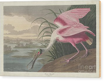 Roseate Spoonbill, 1836  Wood Print by John James Audubon