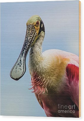 Roseate Spoonbill Close-up Wood Print by Robert Frederick