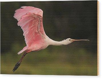 Roseate Spoonbill In Flight Wood Print by Phil Lanoue