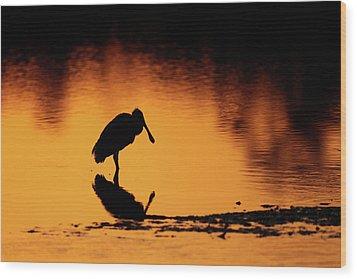 Roseate Spoonbill Silhouette Wood Print