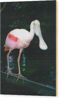 Roseate Spoonbill  Wood Print by Warren Thompson