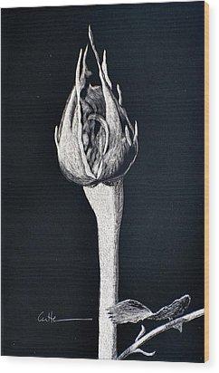 Rosebud Wood Print by Diane Cutter