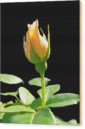 Rosebud Wood Print by Leslie Manley