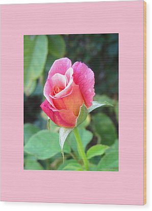 Rosebud With Border Wood Print