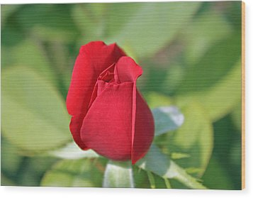 Roses Are Red Wood Print by Dawn Davis