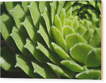 Rosette Wood Print by Lisa Knechtel