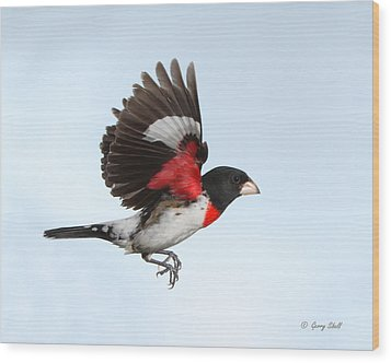 Rosie The Grosbeak Wood Print by Gerry Sibell