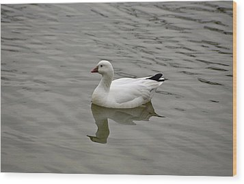 Wood Print featuring the photograph Ross's Goose by Sandy Keeton