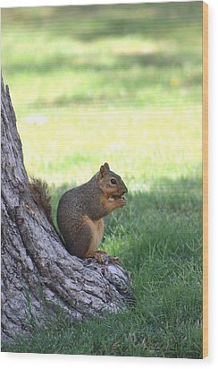 Roswell Squirrel Wood Print by Colleen Cornelius