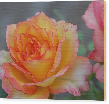 Rosy Outlook Wood Print by Jean Booth