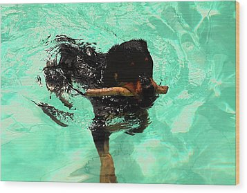Rottweiler Dog Swimming Wood Print by Sally Weigand
