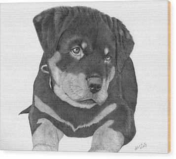Rottweiler Puppy Wood Print by Patricia Hiltz