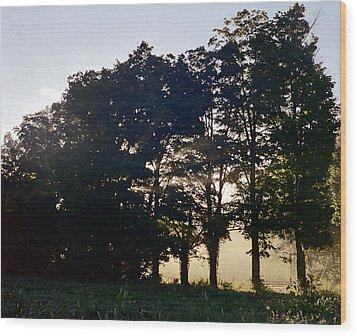 Row Of Trees Wood Print