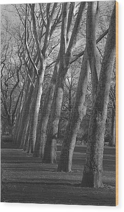 Row Trees Wood Print