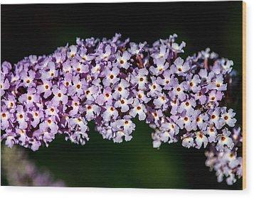 Rows And Flows Of Angel Flowers Wood Print by John Haldane