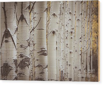 Wood Print featuring the photograph Rows by The Forests Edge Photography - Diane Sandoval