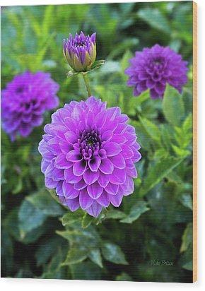 Royal Dahlia Delight Wood Print