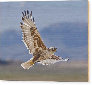 Royal Hawk Wood Print