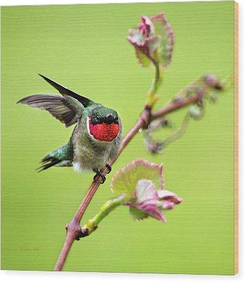 Ruby Garden Hummingbird Wood Print by Christina Rollo