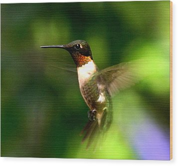 Ruby-throated Hummingbird Wood Print by Fred Baird