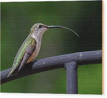 Ruby-throated Hummingbird Tongue Wood Print by Ronda Ryan